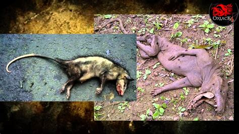 imagenes de encontrar animales ocultos animales ocultos criptozoologia tomo 3 oxlackcastro youtube
