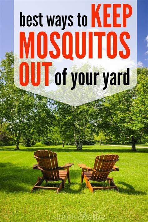how to get a mosquito out of your room best diy crafts ideas how to keep mosquitos out check these 5 known spots and help get