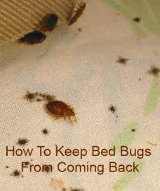 beds bed bugs and on