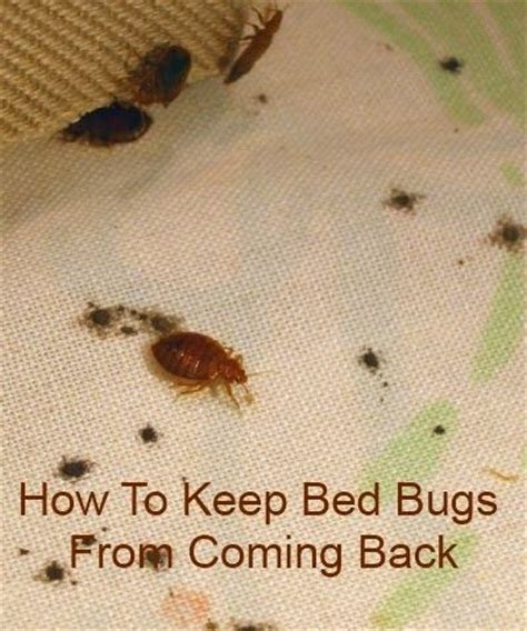 how to clean bed bugs 1000 images about clean the house on pinterest clutter