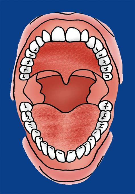 teeth diagram ks2 a series of cross curriculum project plans to support the