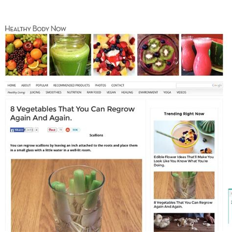 vegetables u can regrow 8 vegetables that you can regrow again and again pearltrees