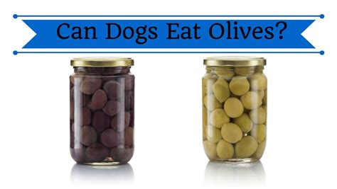 are olives bad for dogs can dogs eat olives smart owners