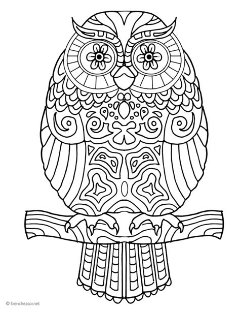 Coloriage hibou ou chouette, dessin anti-stress gratuit