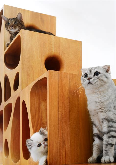 designboom cat furniture gallery of lycs s modular catable 2 0 is purrfect for