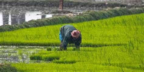 Cultivating Hope: Can the Income of Farmers Double in the Next Five Years?
