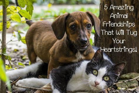 amazing animal friendships   tug  heartstrings dogvills