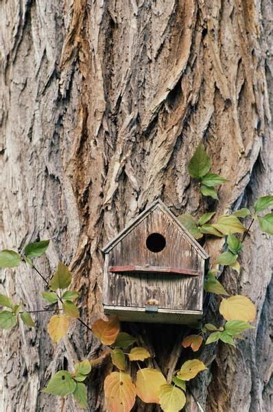 live roof birdhouse 34 best wood bird feeder images on