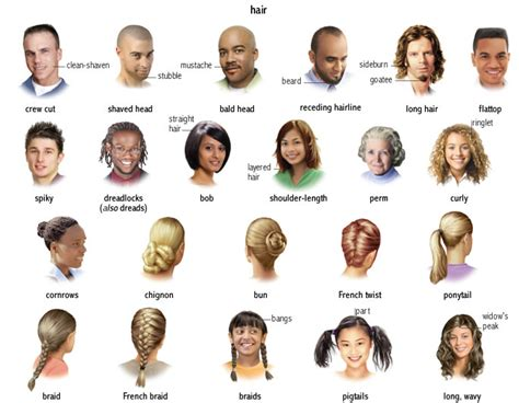 Hairstyles Meaning | hair noun definition pictures pronunciation and usage