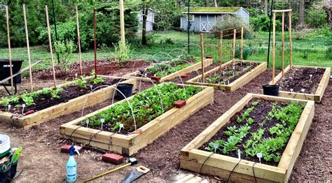 profitable backyard farming backyard farm family grow all the food they need in