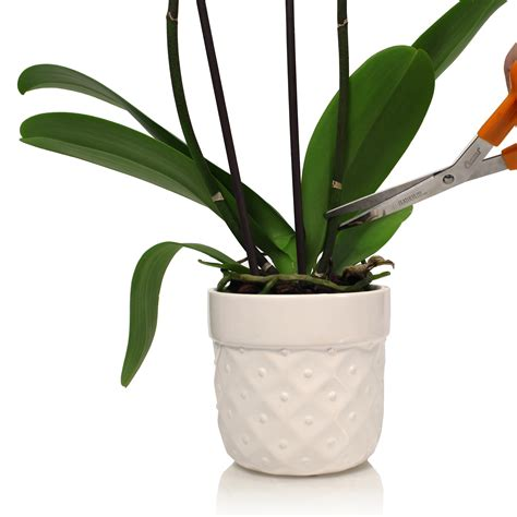 repotting orchids caring for orchid