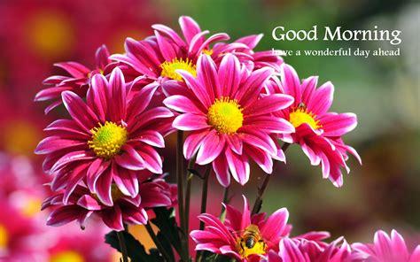 wallpaper flower morning good morning wallpapers free download