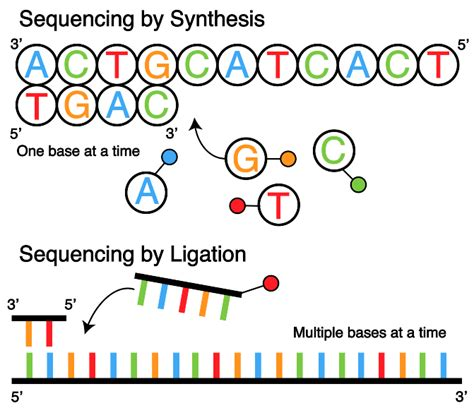 by by sequencing by ligation