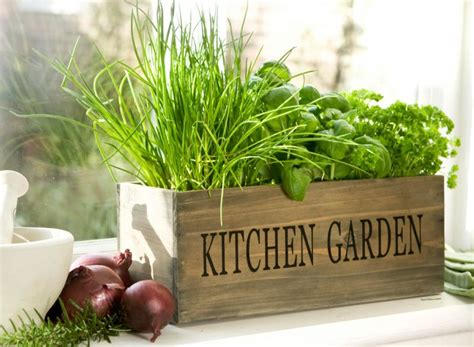kitchen herb gardens and salad walls home rocks