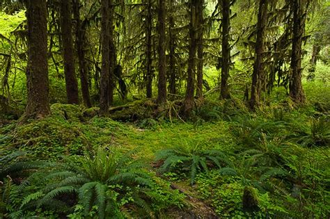 woodland forest plants and trees woodland forest plants and trees newhairstylesformen2014 com