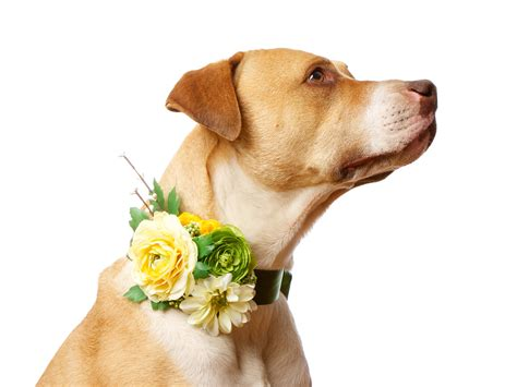 Wedding Accessories For Dogs by Flowers Dogs Collars Canin Collars Dogs Collars