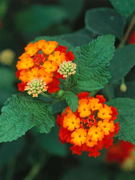 colorful flowers picture orange flowers in bloom light 25 b 228 sta orange flowers id 233 erna p 229 blommor