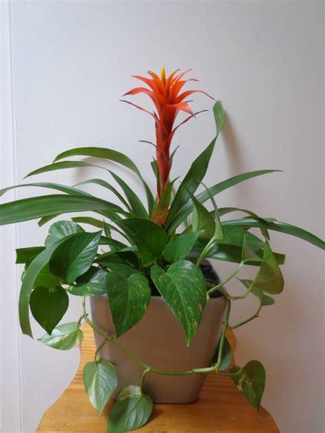 flowering tropical shrubs corporate plants tropical flowering