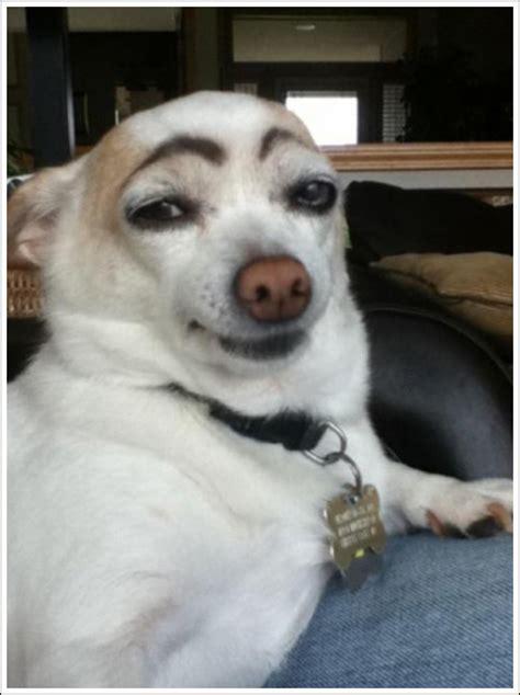 baraskitse dogs  eyebrows