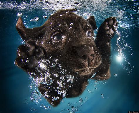 puppies underwater this photographer taught 1 500 puppies how to swim these are the impossibly adorable