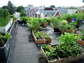 grow organic vegetables  home step  step guide