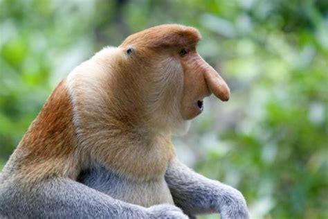 imagenes de animales feos del mundo los animales m 225 s feos del mundo informacion sobre animales