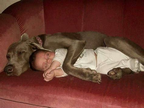 dogs cuddling cuddling baby dogs are the sweetest