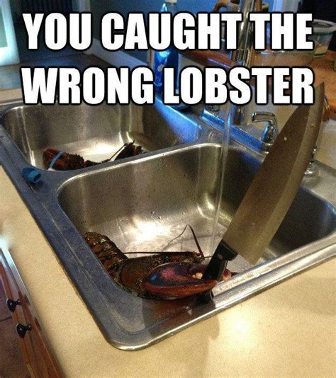 Kitchen Knife Jokes To Make You Laugh Wrong Lobster