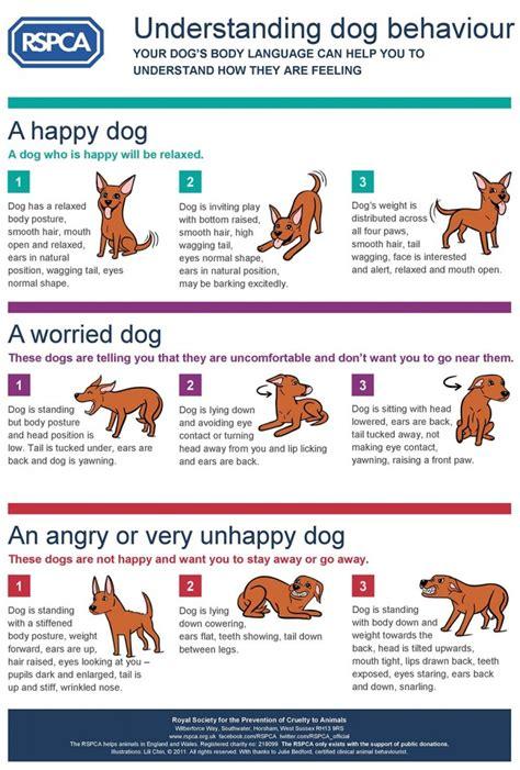 normal puppy behavior how to understand behavior