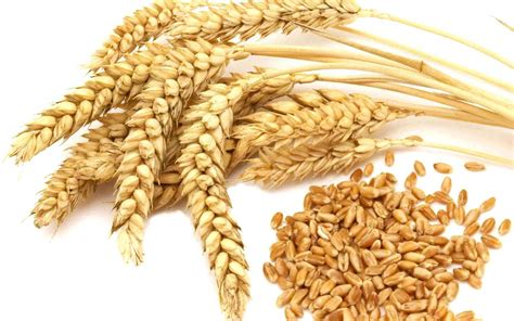 whole grains other than wheat what is whole grain whole grain vs whole wheat