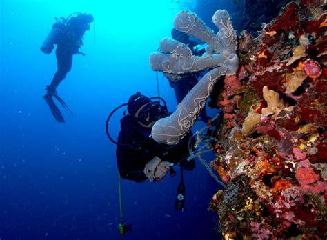 Bibit Terumbu Karang mengaggumkan 150 bibit terumbu karang ditanam mahasiswa