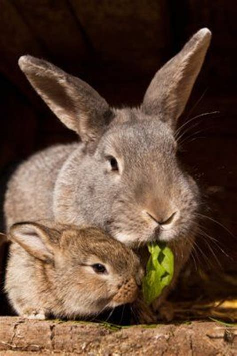 Mam Care Rabbit Pink bunnies baby bunnies and mothers on