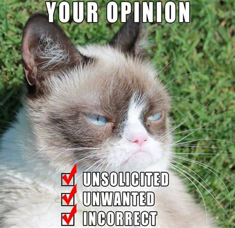 Grumy Cat Memes - 10 new grumpy cat memes