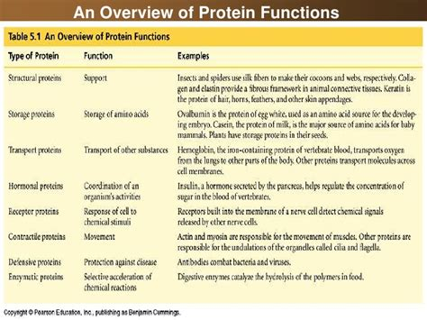 n protein function 07 lipids and proteins and nucleic acids