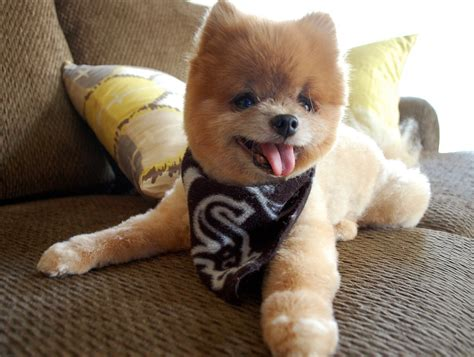 7 Cool Breeds Of Dogs by Cool Breeds Medium Breeds Puppies Choosing