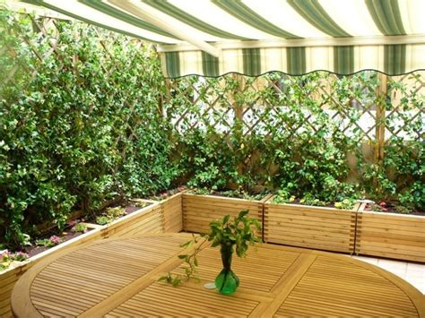 piante sempreverdi per terrazzi siepi per terrazzi siepi scegliere la siepe per il