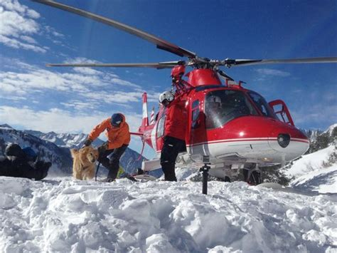 puppies rescued from avalanche henry the vail avalanche rescue unloading from the chopper during backcountry