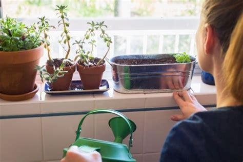 Window Sill Garden Vegetables Diy How To Make Herb Garden On Your Window Sill Ingwest