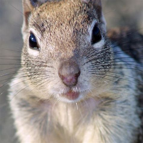 How To Keep Squirrels Away From Garden by Learn How To Keep Squirrels Out Of Your Garden This Is