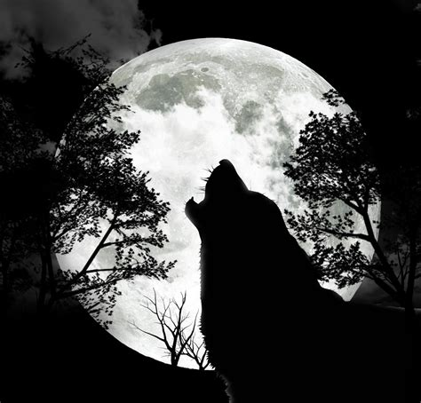 wolf howling at the moon tattoo celebrating the seasons january moon wolf moon