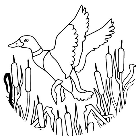 duck hunting coloring pages printable duck best free