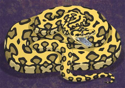 can dogs use human shoo yellow carpet python carpet vidalondon