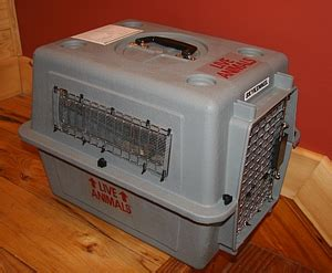 shipping crates  containers  dogs cats  birds