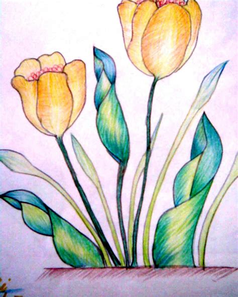 color shading drawings with pencil colour shading pencil colour shading