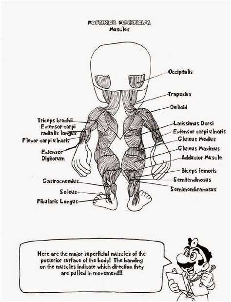 anatomy coloring pages nervous system anatomy coloring book pages coloring home