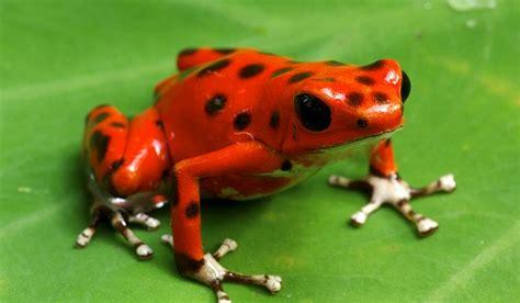 amazon rainforest animals what animals live in the amazon rainforest amazon