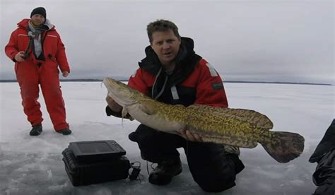 Ontario Records This Burbot Is The New Ontario Record Outdoorhub