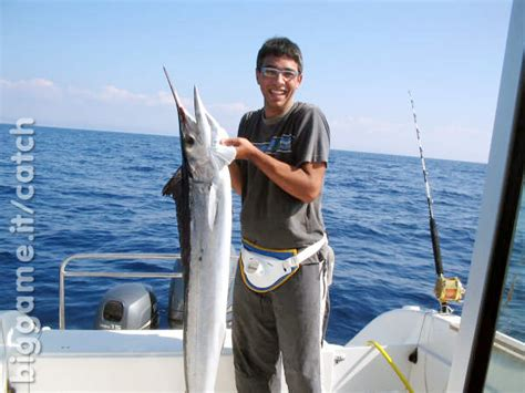 come cucinare le aguglie biggame it pesca traina in altura a agrigento aguglia