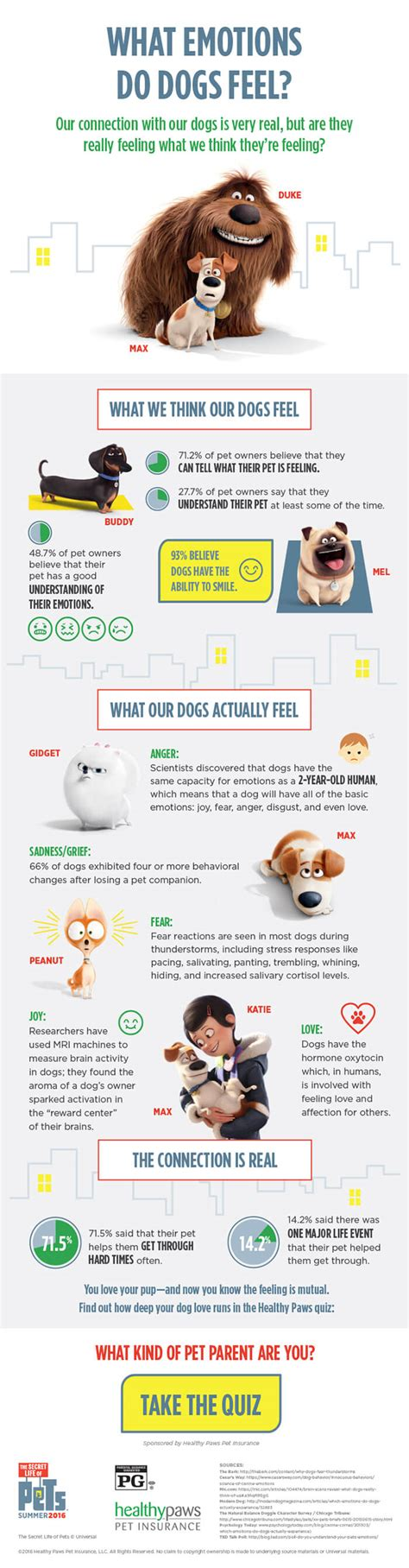 do dogs emotions emotions dogs feel infographic healthy paws