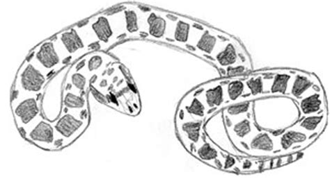 bull snake coloring page rock python colouring pages